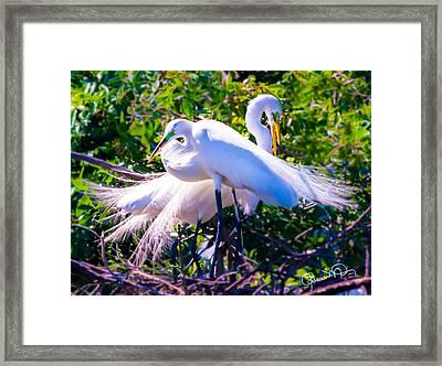 Criss-cross Egrets Framed Print