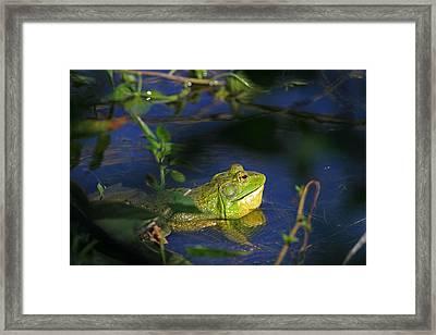 Croaking Bullfrog Framed Print by Donna Kennedy