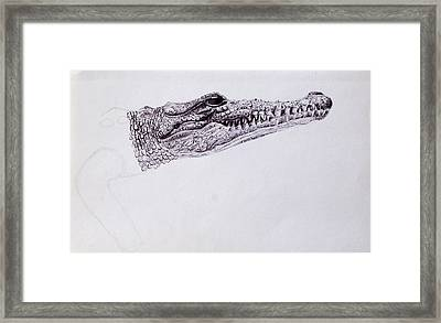 Croc Sketch Framed Print