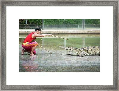 Crocodile Display Framed Print by Pan Xunbin