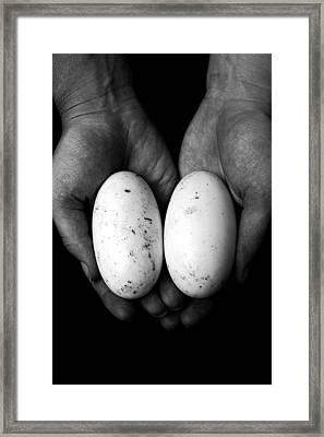 Crocodile Eggs Framed Print by Kim Lagerhem