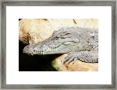 Crocodile Fractal Framed Print by Pati Photography