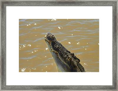 Crocodile Jumping Out Of The Water Framed Print by David Wall