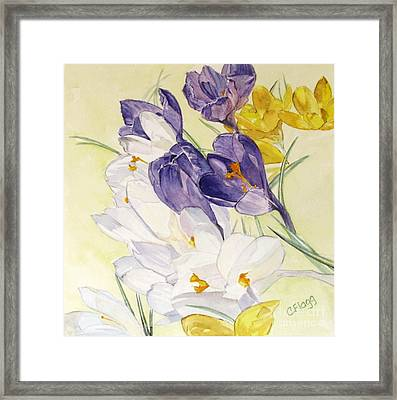 Framed Print featuring the painting Crocus by Carol Flagg