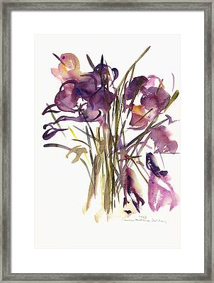 Crocus Framed Print by Claudia Hutchins-Puechavy