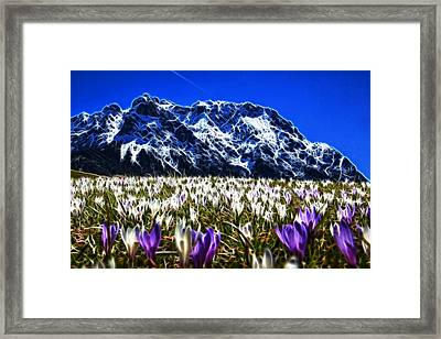 Crocus Meadow Framed Print