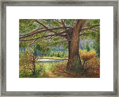 Crooked River Shade Framed Print