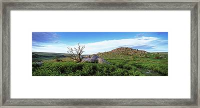 Crooked Tree At Down Tor, Dartmoor Framed Print by Panoramic Images