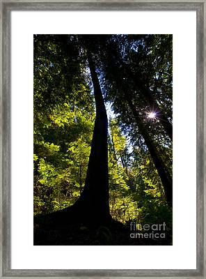Crooked Tree Silohuette Framed Print by Terry Elniski