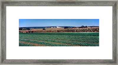 Crop In A Field, Amish Country, Holmes Framed Print