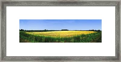 Crop In A Field Framed Print