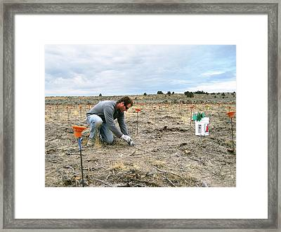 Crop Seedling Research Framed Print by Lori Ziegenhagen/us Department Of Agriculture
