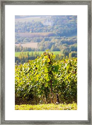 Crops In A Vineyard, Chigny-les-roses Framed Print by Panoramic Images