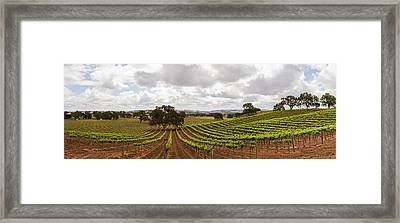 Crops In A Vineyard, San Luis Obispo Framed Print