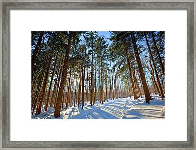 Cross-country Ski Trail In A Spruce Framed Print by Jerry and Marcy Monkman