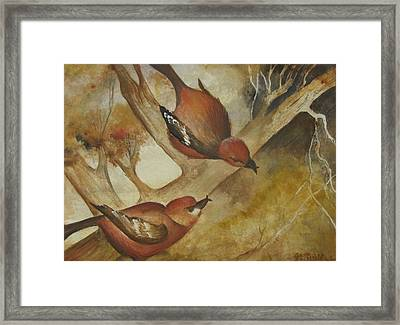 Crossbills Framed Print by Georgia Annwell