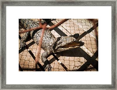 Crossbred Crocodile Framed Print