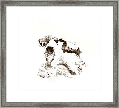 Crossbreed Framed Print by Gina Dsgn