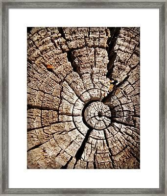Crosscuts Of Wood 6 Framed Print by Carol Toepke