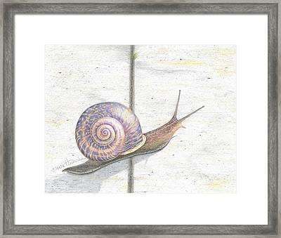 Crossing The Finish Line Framed Print by Diana Hrabosky