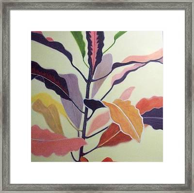 Croton Framed Print by Mary Adam
