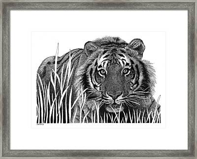 Crouching Tiger Framed Print