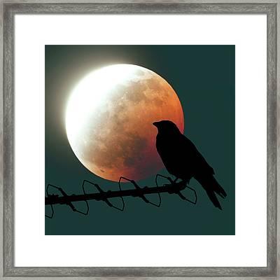 Crow And Lunar Eclipse Framed Print