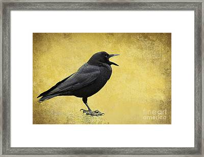Crow - D009393-a Framed Print by Daniel Dempster