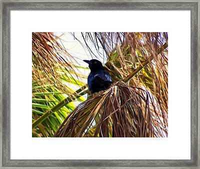 Crow In A Palm Tree Framed Print by Chris Flees