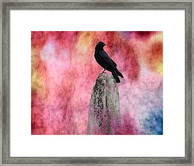 Crow In Colors Framed Print by Gothicrow Images