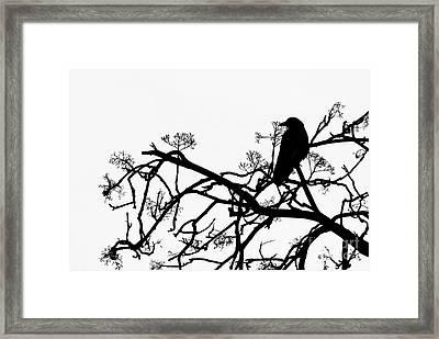 Crow Framed Print by Jasna Buncic