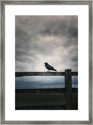 Crow Framed Print by Joana Kruse
