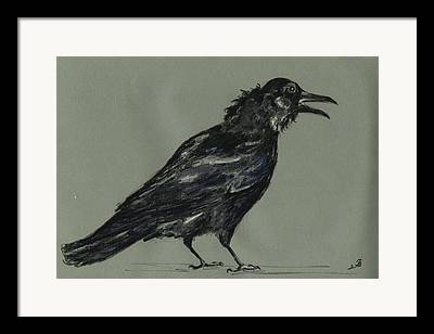 Corvus Framed Prints