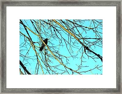 Framed Print featuring the photograph Crow by Kjirsten Collier