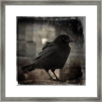 Crow Portrait Framed Print