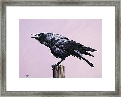 Crow - Sounding Off Framed Print by Crista Forest