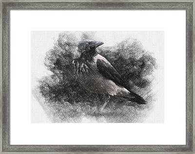 Crow Framed Print by Taylan Apukovska