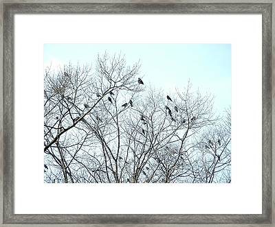 Crow Trees Framed Print