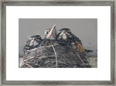 Framed Print featuring the photograph Crowded Nest by Wendy Coulson