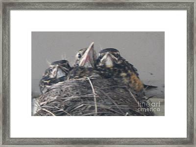 Crowded Nest Framed Print