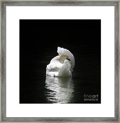 Crown Of Feathers II Framed Print by Lynn Jackson