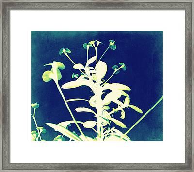 Crown Of Thorns - Blue Framed Print by Shawna Rowe