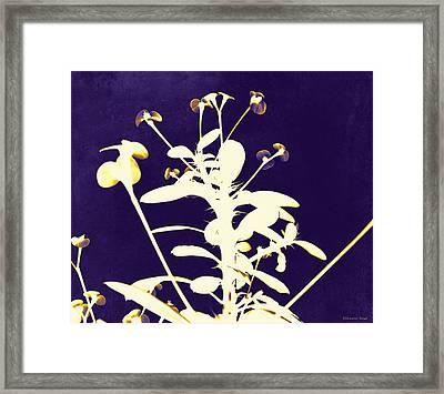 Crown Of Thorns - Indigo Framed Print by Shawna Rowe