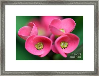 Framed Print featuring the photograph Crown Of Thorns Photo by Meg Rousher