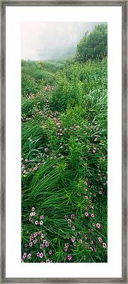 Crown Vetch Flowers, Herrington Manor Framed Print by Panoramic Images