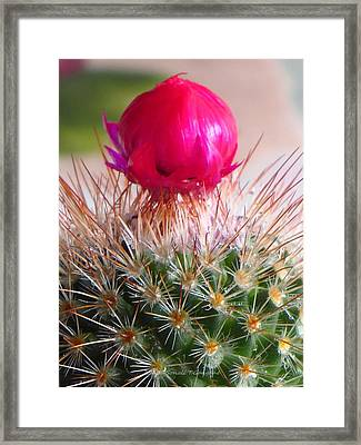 Crowned Beauty Framed Print