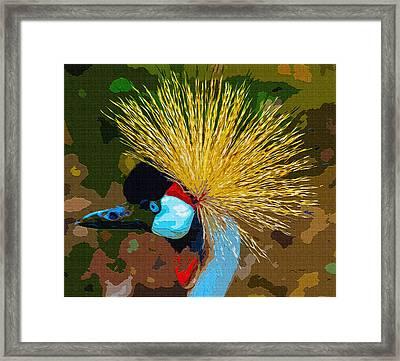 Crowned Crane Framed Print by Brian Stevens