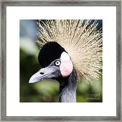 Crowned Heron 2 Framed Print