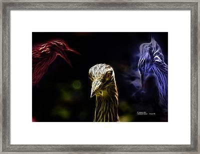 Crowned Heron - 5466 Fa Framed Print by James Ahn