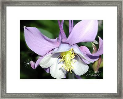 Crowned In Purple Framed Print